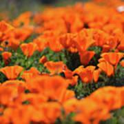 Antelope Valley California Poppies Art Print