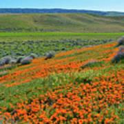 Antelope Valley Poppy Reserve Art Print