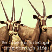 Antelopes Art Print