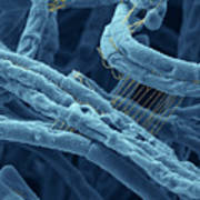 Anthrax Bacteria Sem Print by Eye Of Science and Photo Researchers