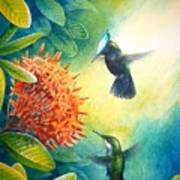 Antillean Crested Hummingbirds And Ixora Art Print