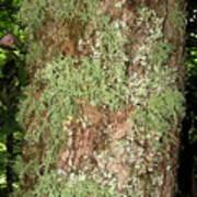 Appalachian Arbor Flora Art Print