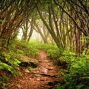 Appalachian Hiking Trail - Blue Ridge Mountains Forest Fog Nature Landscape Art Print