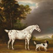 Appaloosa Horse And Spaniel Art Print
