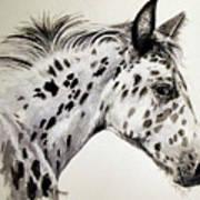 Appaloosa Art Print