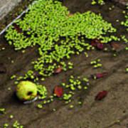 Apple And Algae In Dam Overflow Art Print