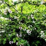Apple Blossom Digital Painting Art Print