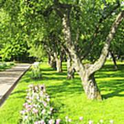 Apple Garden Art Print