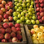 Apple Harvest Art Print