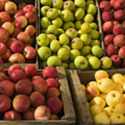 Apple Harvest Print by Garry Gay