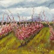 Apple Hill Springtime Art Print