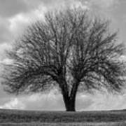 Apple Tree Bw Art Print