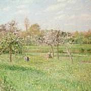 Apple Trees At Gragny Print by Camille Pissarro