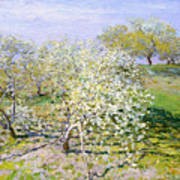 Apple Trees In Bloom  Art Print