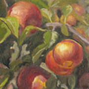 Apples In The Orchard Art Print