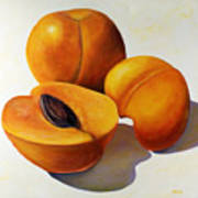 Apricots Art Print by Shannon Grissom