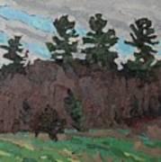 April White Pine Forest Art Print