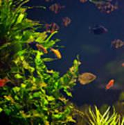 Aquarium Fish And Plants In Zoo Art Print