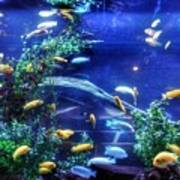 Aquarium Fish Art Print