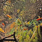 Aquarium Reflections Art Print
