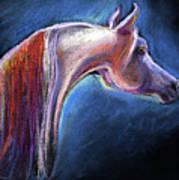 Arabian Horse Equine Painting Art Print