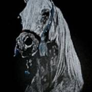 arabian horse I Art Print