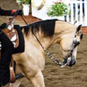 Arabian Show Horse 5 Art Print