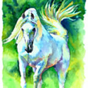 Arabian Stallion Art Print