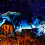 Arabian Stallion Art Print by ELA-EquusArt