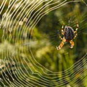 Araneus Morning Art Print