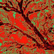 Arboreal Plateau 9 Art Print