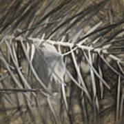 Arborescence Art Print