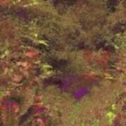 Arboretum Pond Art Print