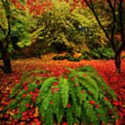 Arboretum Primary Colors Art Print