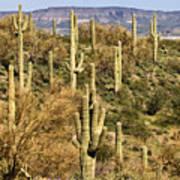 Arizona Desert Art Print