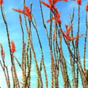 Arizona Nature Art Print