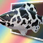 Art Fish Fun Art Print