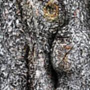 Art Within A Tree Art Print