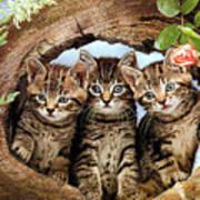 Three Cats Art Print