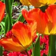 Artsy Tulips Art Print