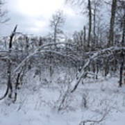 As Winter Returns Art Print