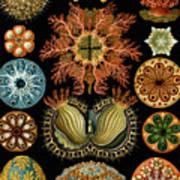 Ascidiae Art Print
