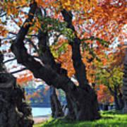 Asian Cherry Trees Of Fall Art Print