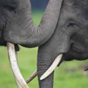 Asian Elephant Greeting Art Print