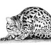 Asian Leopard Cat Art Print