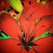 Asian Lily Art Print
