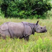 Asian Rhinoceros Art Print