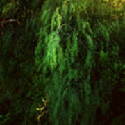 Asparagus Jungle Art Print