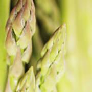 Asparagus Spears Macro Art Print