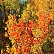 Aspen Colors In Dillon Colorado Art Print